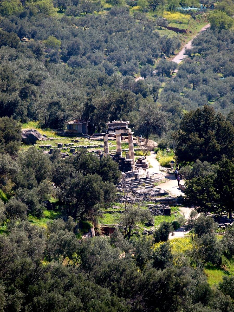 Οι κολώνες του ναού της Αθηνάς προναίας, ανάμεσα στις ελιές, στους Δελφούς.
