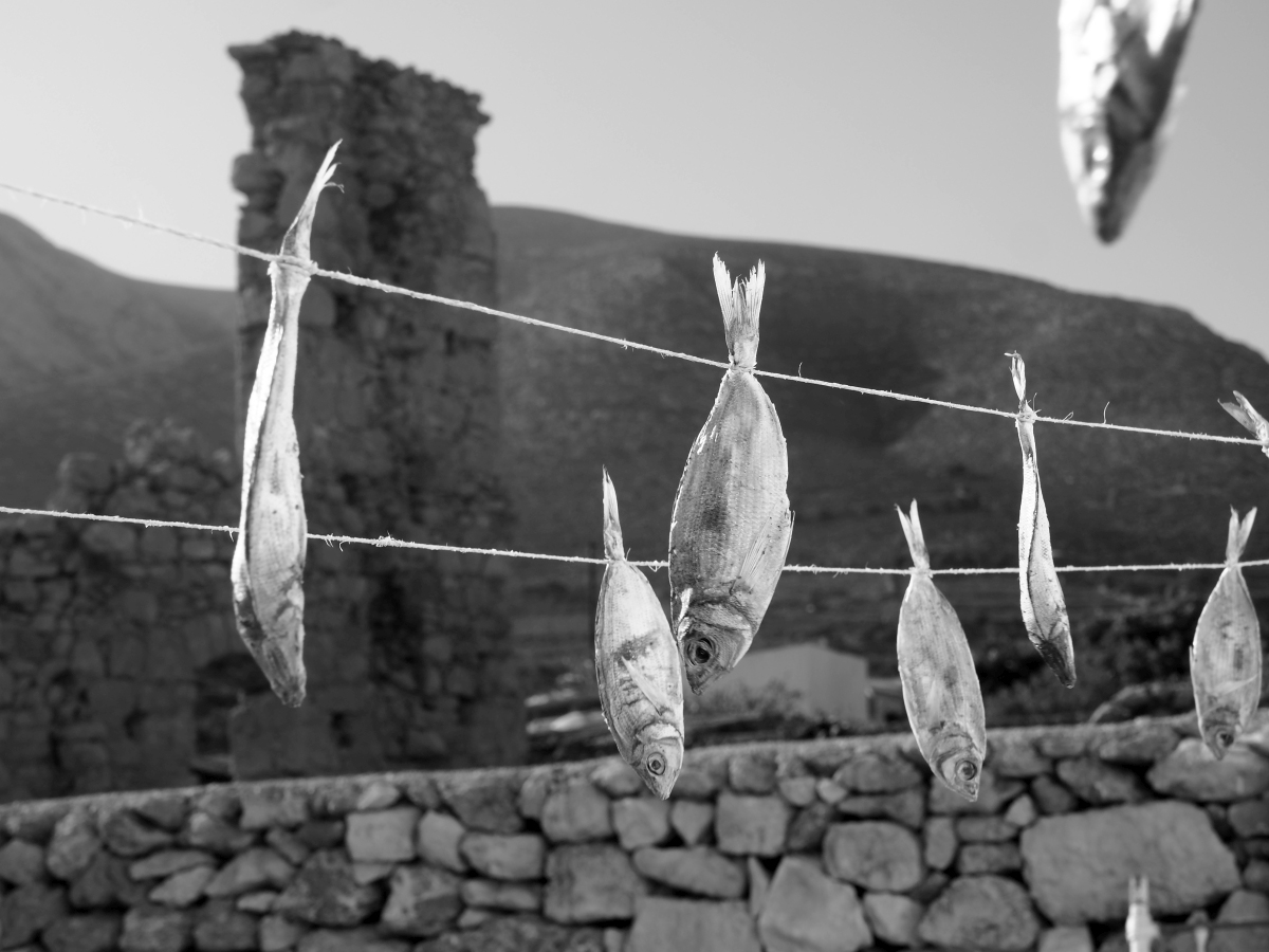 Φαρδιές μένουλες κρεμασμένες στον ήλιο για να γίνουν τσίροι.