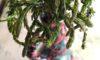 Οβριές και άγρια σπαράγγια, η πρώτη γεύση της άνοιξης